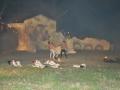 La Leggenda Del Drago 2010 (87)